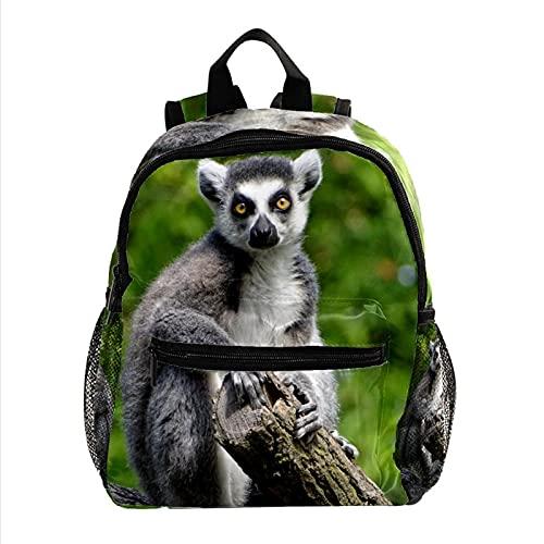 Kids DaypackSac À Dos 3-8 ANS Enfants Léger Toddler Daypack Pour Maternelle Et Le Voyage De Bébé Sac À Langer Lémur Animal 25.4x10x30cm
