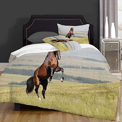 DIIRCYB la Couette-Le Linge de lit,Bay Akhal-Teke Horse Stallion Rearing on The Field Noble Mammal Outdoors,Microfibre,1 Couette 220×240CM et 2 taie d'oreiller 50×80CM