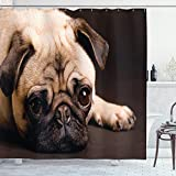 ABAKUHAUS Mops Duschvorhang, Welpen-Foto-Tiere, mit 12 Ringe Set Wasserdicht Stielvoll Modern Farbfest & Schimmel Resistent, 175x180 cm, Hellbraun Braun