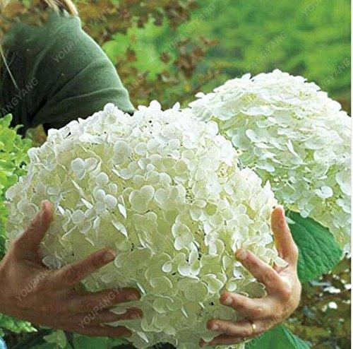 Vente chaude 30pcs Hortensia blanc festival fleurs de soie artificielle bouquet de mariage Home Living Room Decor Belles Graines Bonsai