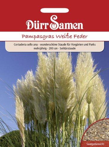 Dürr Samen 1084 Pampasgras Weiße Feder (Pampasgräsersamen)