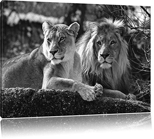 Pixxprint interessiertes Löwenpaar Kunst B&W als Leinwandbild | Größe: 120x80 cm | Wandbild | Kunstdruck | fertig bespannt
