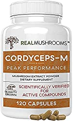 cordyceps the best mushroom supplement