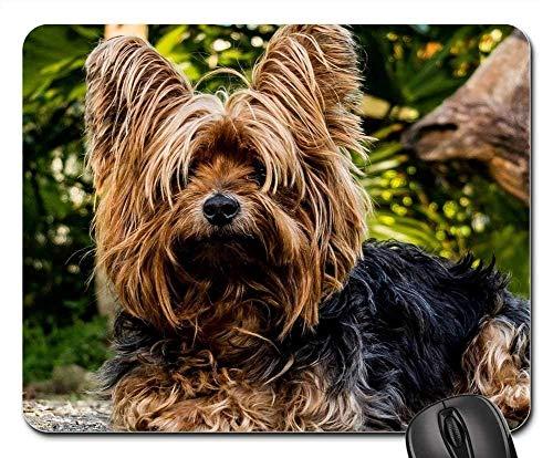 Mauspads - Hund Yorkshire Terrier Kleiner Hund