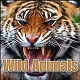 Animal, Elephant - Multi Trumpets, Trumpets with Inhales, Groans, Blows, Snorts, Smacks Elephants, Hippos & Rhinos