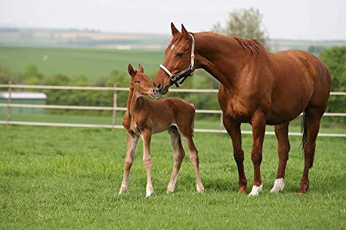 Kiepenkerl 4000159803046 Country Horse 2118 Semences de Prairie pour Chevaux 10 kg