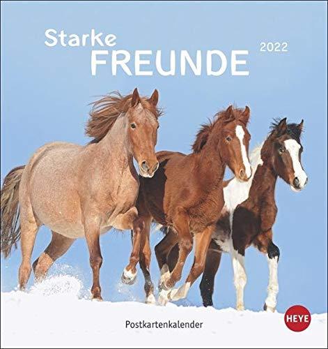 Pferde Postkartenkalender 2022: Starke Freunde