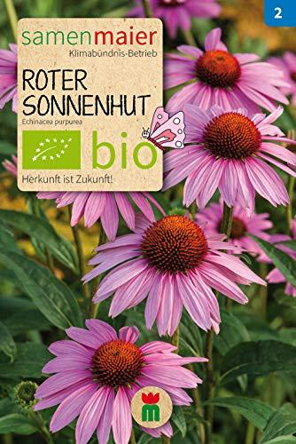 BIO Roter Sonnenhut (Echinacea purpurea)