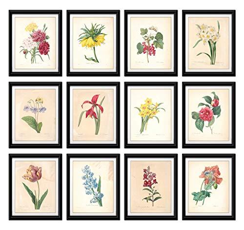 Wish Pub – Set di 12 Stampe artistiche Vintage con Fiori botanici Senza Cornice, di Pierre-Joseph Redoute, 20,3 x 25,4 cm