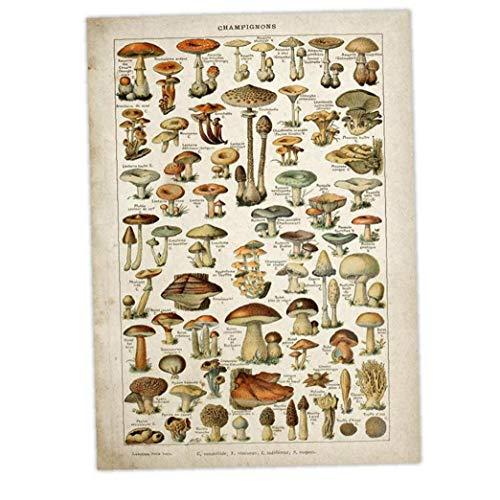 Lankater Vintage Blumenleinwanddruck Poster Antike Kunst Botanical Educational Pilz Tapete Dekor