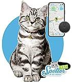 Spotter GPS-Katzen-Tracker Abonnement und wasserdicht. Der kleinste GPS-Tracker mit Aktivitätentracker, Zonen, Alarmen und Anruffunktion. Immer wissen, wo Ihre Katze gerade ist.