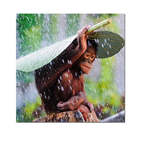 Aapje met bladeren om de regen buiten te houden Wall Art Canvas Prints Dieren Schilderijen Wall Decor Pictures For Kids Room -50x50cm No Frame