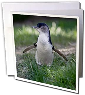 3dRose Omaha, Henry Doorly Zoo. Little Blue Penguin - US26 GHA0030 - Gayle Harper - Greeting Cards, 6 x 6 inches, set of 6 (gc_91531_1)