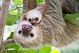 KsimYa 1000 Puzzle Sloth Mother Rompecabezas (Rompecabezas de Cubos, Adultos
