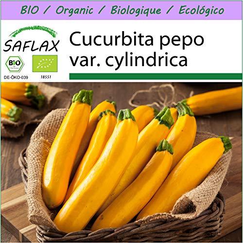 SAFLAX - BIO - Ziucchini - Gold Rush - 5 Samen - Cucurbita pepo