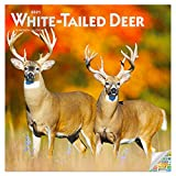 White Tailed Deer Calendar 2021 Bundle - Deluxe 2021 White-Tailed Deer Wall Calendar with Over 100 Calendar Stickers (Trophy Bucks Gifts, Office Supplies)