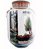 Jodeco Glass DIY XXL Flaschengarten Set Just Add Plants TAJGA Biosphere Pflanzenterrarium Mit Korkdeckel Höhe 34 cm Ø 24 cm Mini Garten In Glasgefäß Mit Deckel