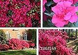 10 Farben Rhododendron Samen vergossen Azalea biji Baumsamen, Sorten komplette 200 Partikel / bag Gartenbonsai Pflanzen