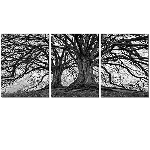 Visual Art Decor 3 Pieces Black and White Trees Canvas Wall Art Winter Oak