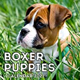 Boxer Puppies Calendar 2021: 16-Month Calendar, Cute Gift Idea For Boxer Dog Lovers Men & Women