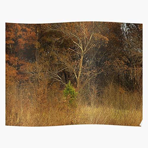 dressbarn Canvas Autumn Trees Filter Texture Gimp Cartoon Das eindrucksvollste und stilvollste Poster für Innendekoration, das derzeit erhältlich ist