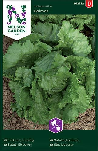 Eisbergsalat Samen Calmar - Nelson Garden Gemüse Saatgut - Kopfsalat Samen (400 Stück) (Einzelpackung)