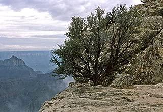 Best mountain mahogany plant Reviews