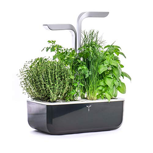 VERITABLE - Smart Garden - Indoor Cultivation with Automatic LED Adjustment Based on Ambient Light - Kit of 4 Seeds Included (White)
