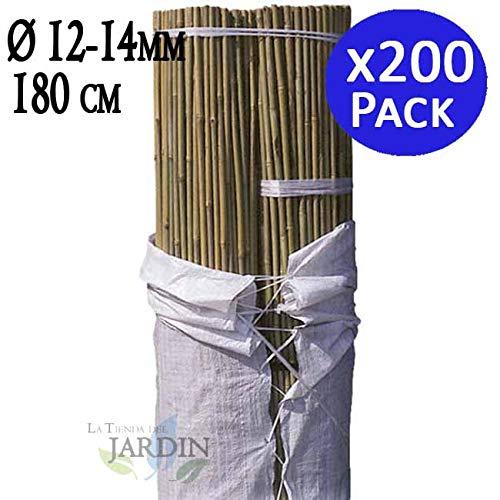 TUTOR DE BAMBU 180 cm, diámetro 12-14 mm. Uso agrícola para sujetar árboles, plantas y hortalizas. Pack ahorro de 200 Cañas de bambú