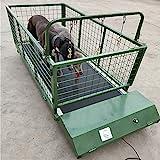 QNMM Fitness Pet Treadmill Indoor Pet, Tapis pour Chien, Animal, Mastiff Tibétain, Grand Chien, Tapis De Course Exercices pour Chiens Jusqu'à 300 Lbs
