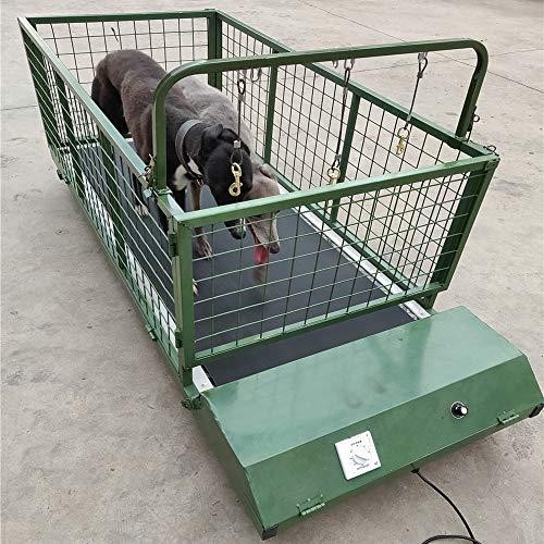 QNMM Tapis Roulant per Animali Domestici da Interno, Tapis Roulant per Cani, Animale, Mastino Tibetano, Cane Grande, Tapis Roulant Esercizio per Cani Fino a 300 Libbre, Attrezzatura per Esercizi