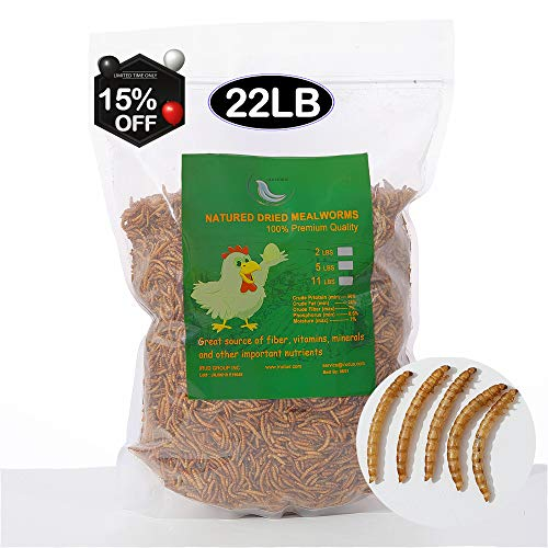 Euchirus 22LB Non-GMO Dried Mealworms for Wild Bird Chicken Fish,High-Protein,Lrage...