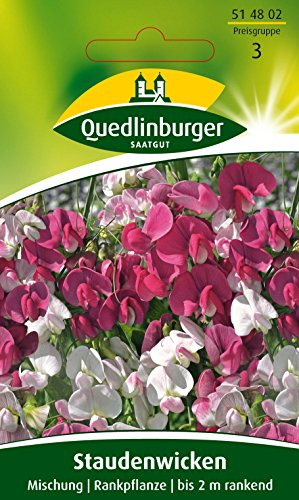 Staudenwicken, Mischung, Lathyrus latifolius, ca. 10 Samen
