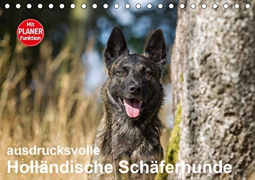 ausdrucksvolle Holländische Schäferhunde (Tischkalender 2021 DIN A5 quer)