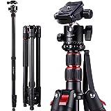 K&F Concept S210 200cm Trípode Completo para Cámara Reflex con Monopie 205cm/Pies de Goma Antideslizantes/Puntas de Metal Pica/Cuerda para Muñeca y Rótula de Bola 360° para Canon Nikon Sony Olympus