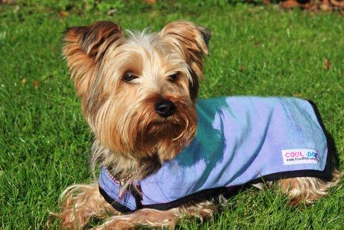 Prestige Pet Products Uk Ltd Manteau cool pour chien
