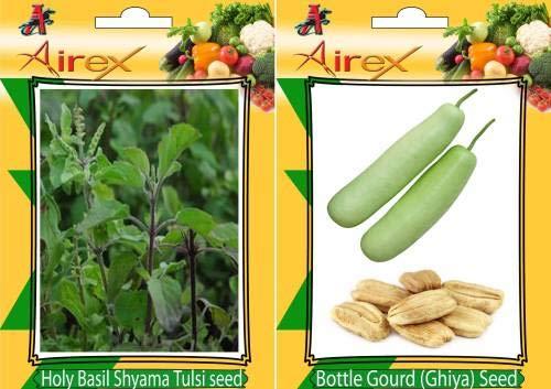 FERRY Hohe Wachstum Seeds Nicht NUR Pflanzen: Seed Holy Basil (Shyama Tulsi), Flasche (Ghiya) Seed (20 pro Paket)