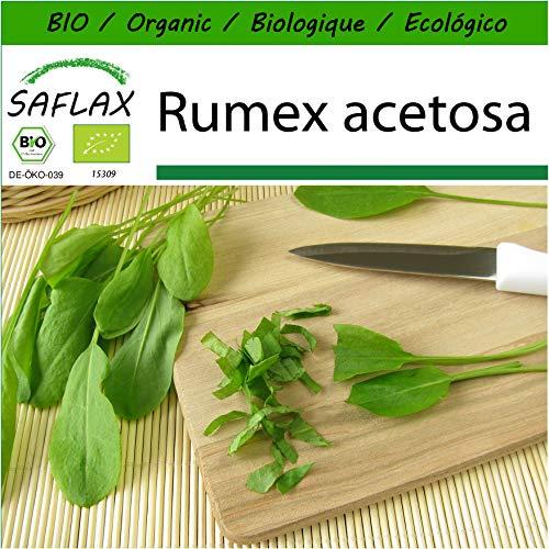 SAFLAX - BIO - Oseille commune - 400 graines - Avec substrat de culture aseptique - Rumex acetosa