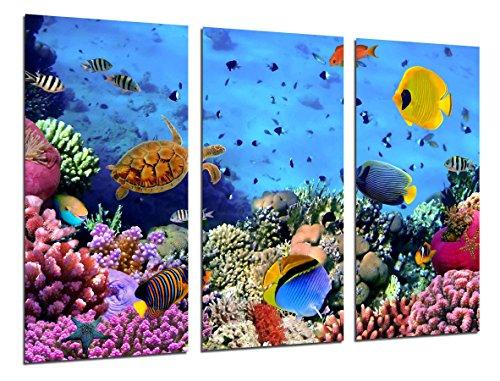 Cuadro Fotográfico Paisaje Bajo el Mar, Peces Acuario Tamaño total: 97 x 62 cm XXL