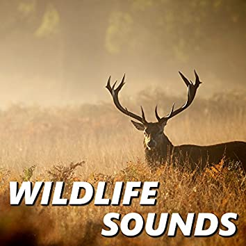 Wildlife Sounds