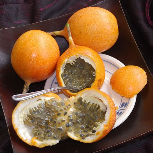 Plant World Seeds - Passiflora Ligularis Seeds