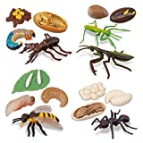 TOYMANY 16PCS Insect Figurines Life Cycle of Stag Beetle,Honey Bee,Mantis,Ant Plastic Safariology Bug Figures Toy Kit Caterpillars to Butterflies Educational School Project for Kids Toddlers