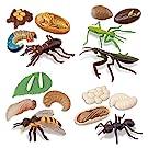 TOYMANY 昆虫フィギュアセット 動物フィギュア 成長サイクル 昆虫動物モデル リアルな動物模型 昆虫おもちゃ 誕生日プレゼント クリスマス コレクション クワガタムシ カマキリ アリ ミツバチ 6歳以上