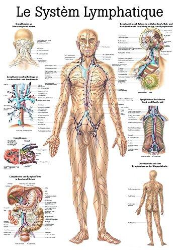Ruedige Anatomie PA09 Le Système lymfeatisch bord, Frans, 70 cm x 100 cm, papier