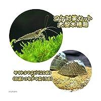 (エビ・貝)コケ対策セット 大型水槽用 ヤマトヌマエビ(20匹) +(B品)フネアマ貝(3匹) 北海道航空便要保温