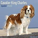 Cavalier King Charles Spaniel Calendar 2020