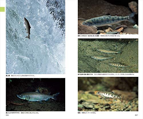山溪ハンディ図鑑増補改訂日本の淡水魚