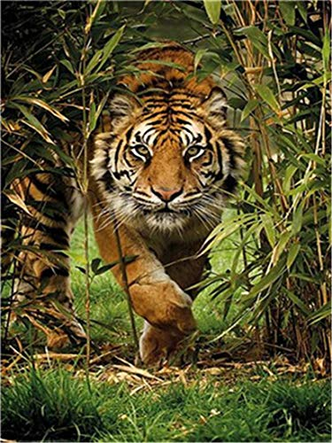 DIY Oil Painting Paint by Number Kit for Kids Adults Beginner 16x20 inch - Tiger in The Grass, Drawing with Brushes Christmas Decor Decorations Gifts (Without Frame)