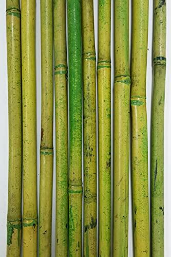 Green Floral Crafts   Natural River Cane   4-5 FT   Green/Tan