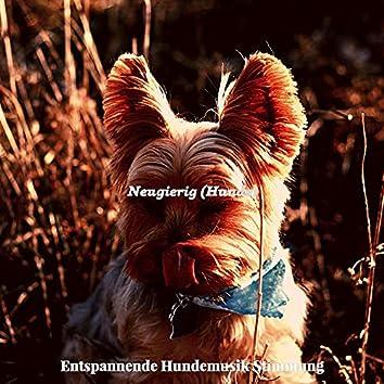 Neugierig (Hunde)